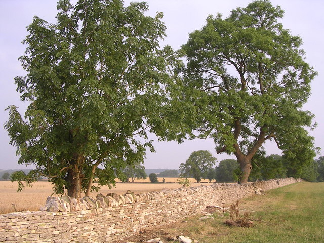 Restoration of Dry Stone Wall