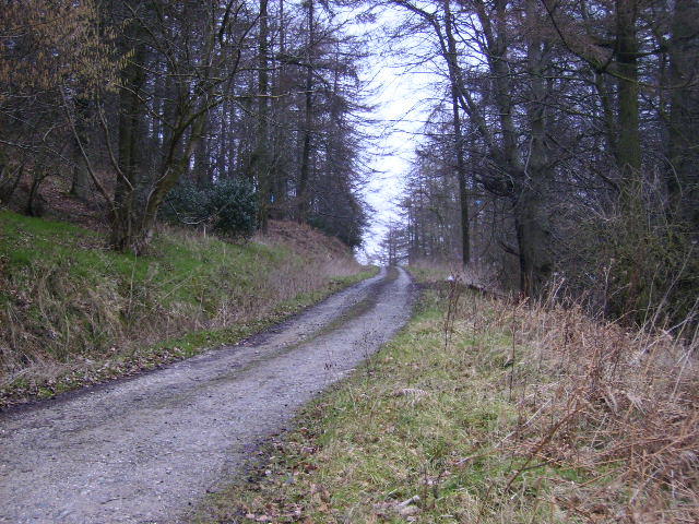 Forestry track in Wainess Hill Wood