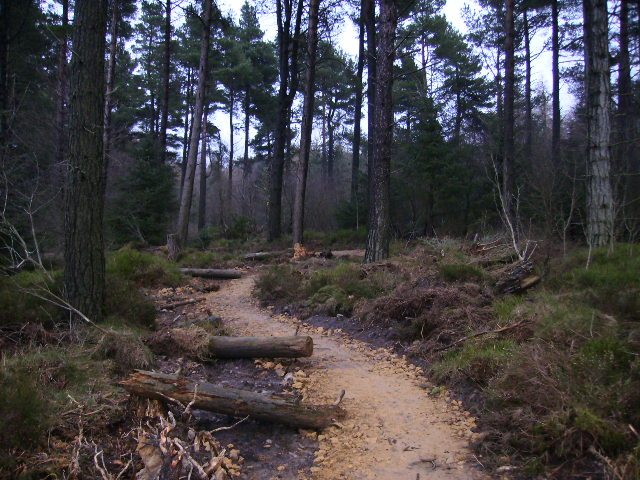 New mountain bike trail in Dalby Forest