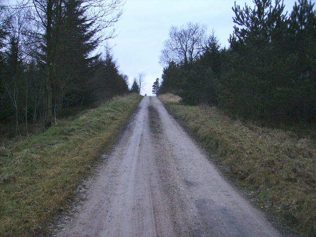 Forestry track at Brown Howes in Dalby Forest