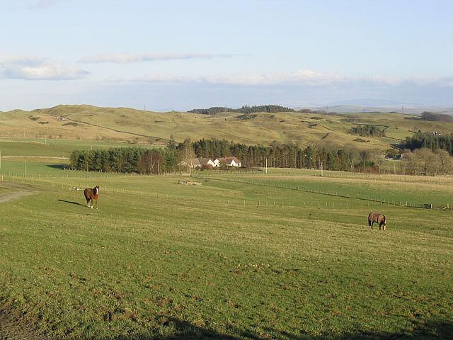 Horses at Whitfield