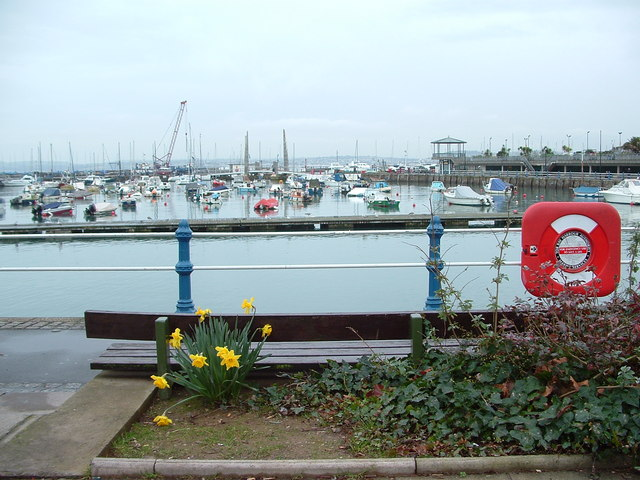 Daffodils and the Harbour, Torquay