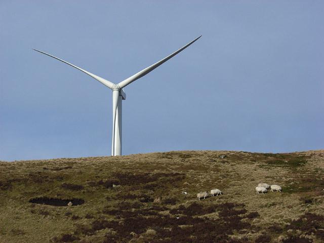 Sheep and turbine, Hart Hill