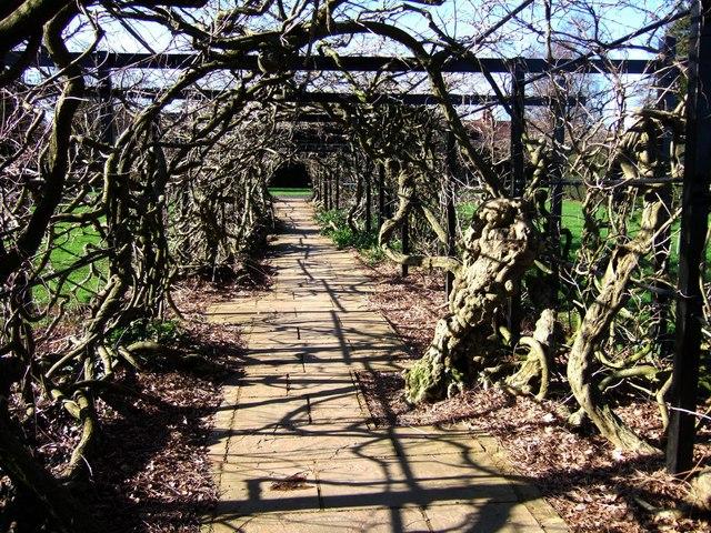 Wisteria pergola, Pince's Gardens, Exeter