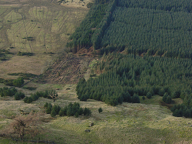 Forestry, Ballochleam