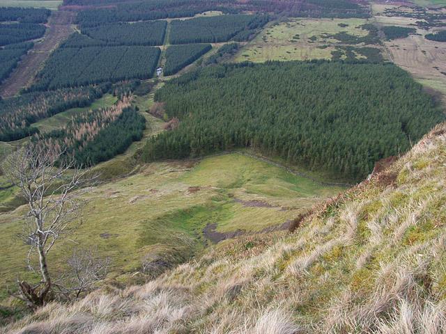 Forest below Black Craig