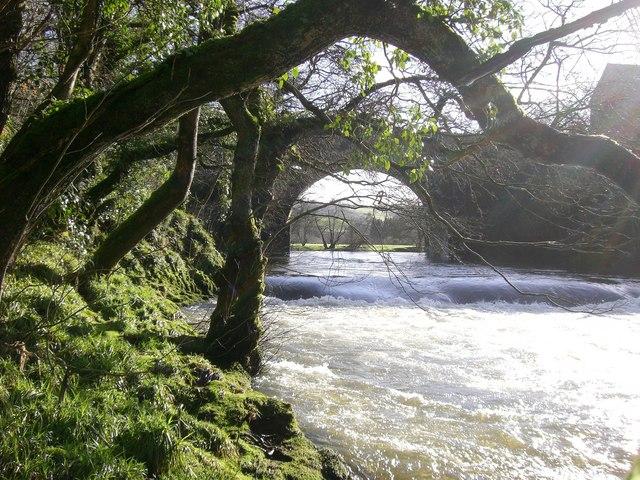 Afon Teifi