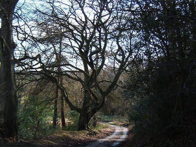 A gnarley tree at Rabbitbank Woods