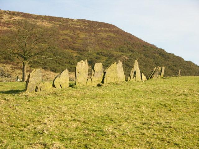 Old field Boundary - Holcombe