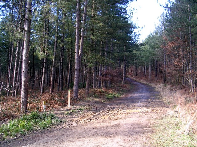Bridlepath in Bedgebury Forest