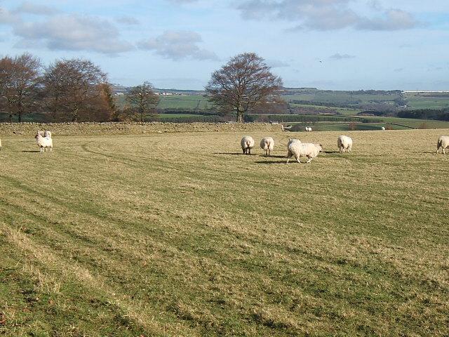 Pasture at  David's Town