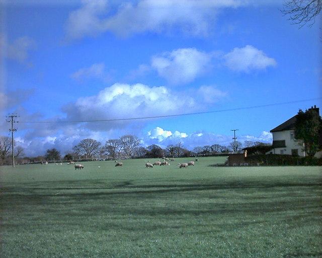 Farmland in Chwilog in spring