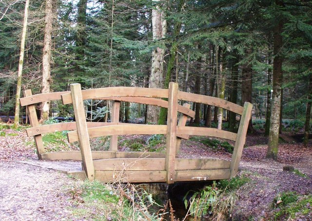 Footbridge on the Rhinefield Drive Tall Tree Route