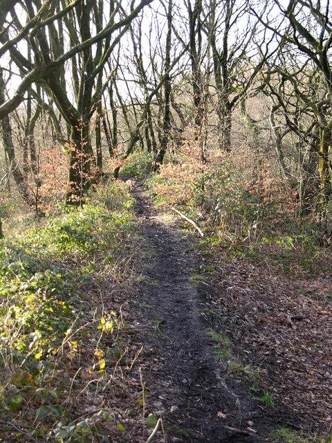 Woods behind Woodhey school