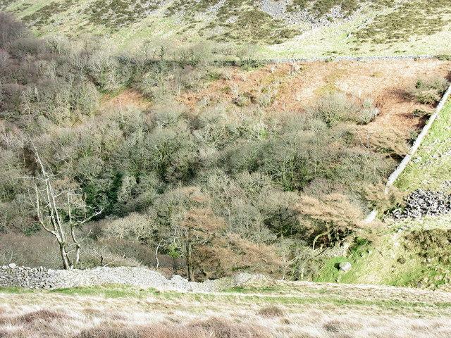 The upper boundary of Cwm-gwared Plantation
