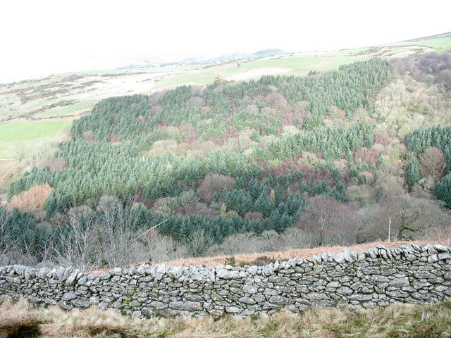 The incised valley of Afon Hen and the Cwm-gwared Plantation