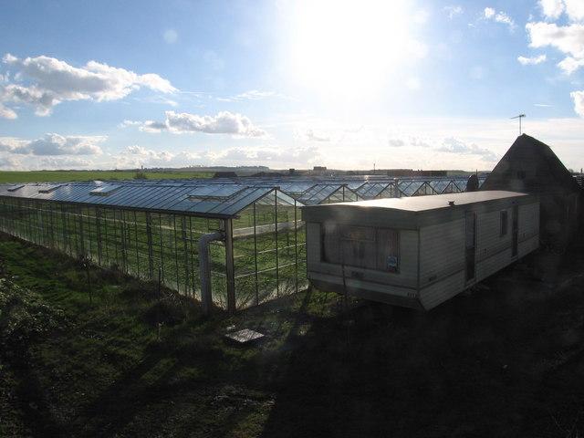 Greenhouses at Turnpike Nursery
