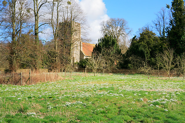 Snowdrops surrounding St Andrew's Church, Hurstbourne Priors