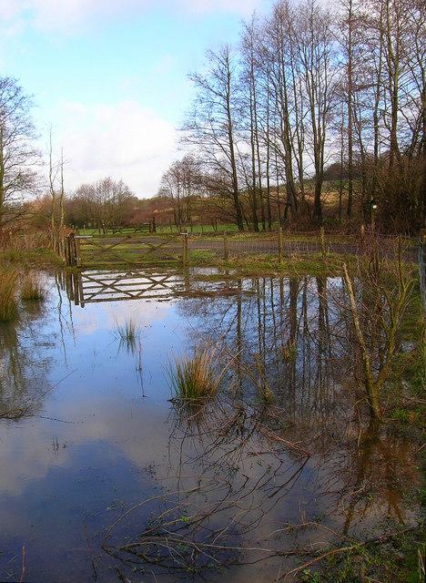 Marshy Ground