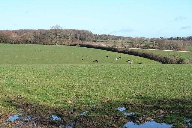 Southleigh: near Borcombe Farm