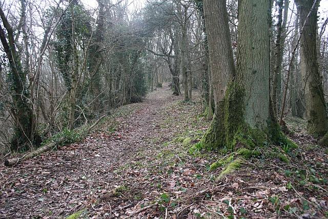 The Ridge of Frith Wood