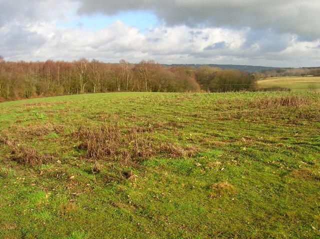 Popland Wood
