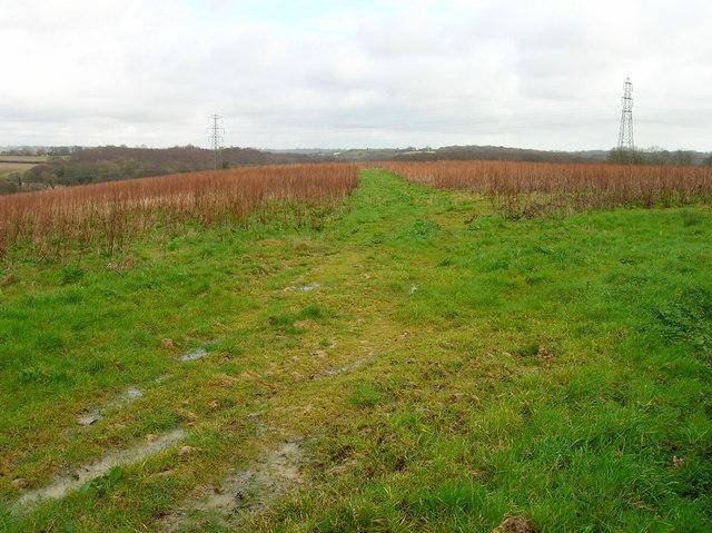 Footpath to Popland Wood