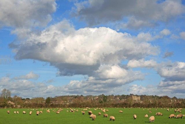 Sheep Pasture, Wimborne Minster