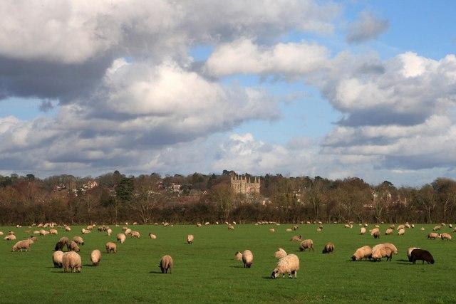 Sheep Pasture, Wimborne Minster 2