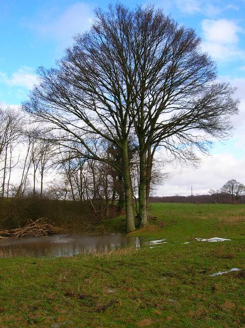 Pond near Oak Wood