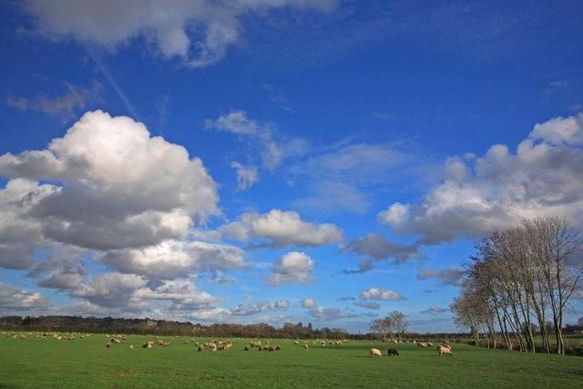 Sheep Pasture, Wimborne Minster 3