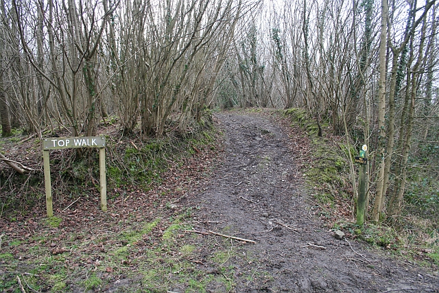 The Top Walk Footpath, Frith Wood