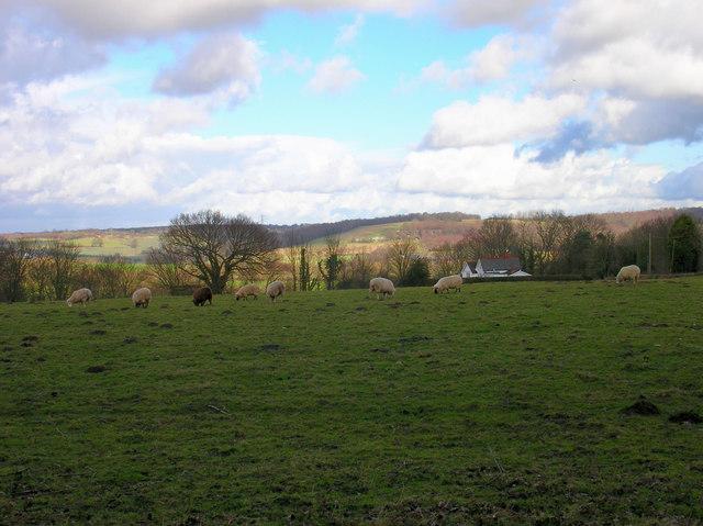 Wealden Landscape from Westbrook Lane