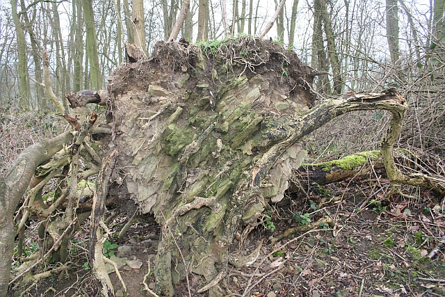 Geology of Frith Wood Exposed
