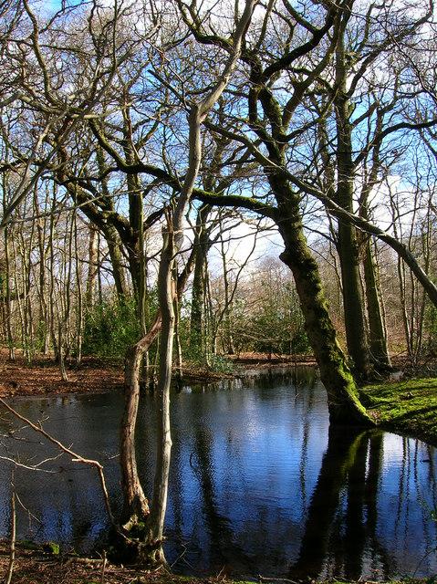 Pond, Shirke Shaw