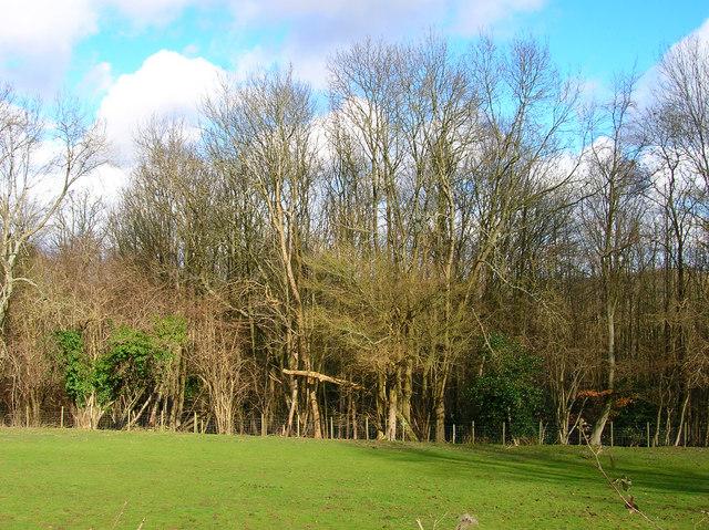 Dean's Wood