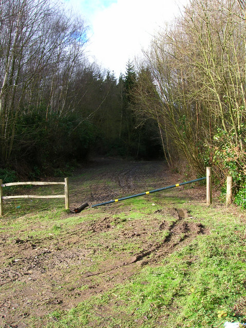 Forestry Track, Brassetts Wood