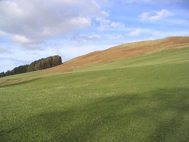 Hill pasture