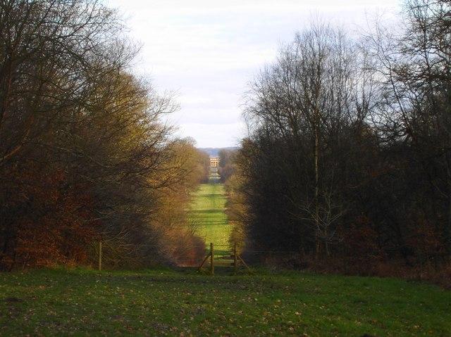 A view along Column Ride, Savernake