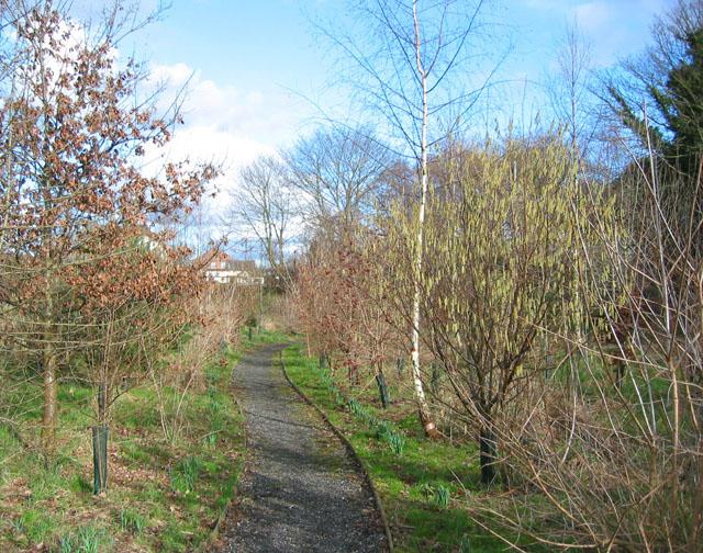 Spinners Wood, Ravensmoor
