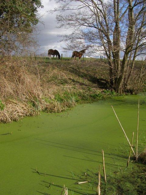 Green stream alongside the Test Way, Nursling
