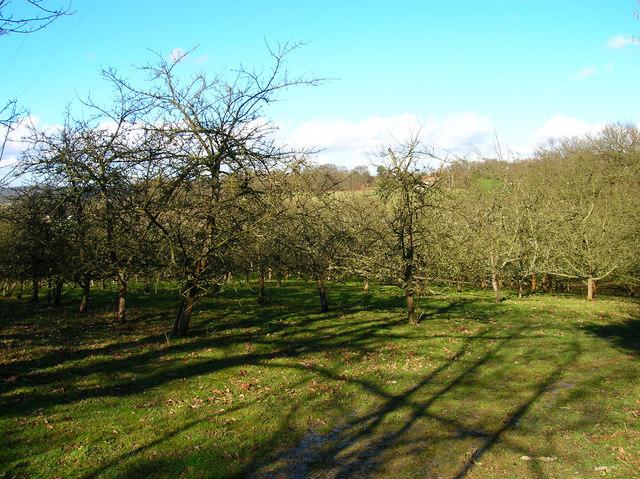 Orchard, Waydown Farm