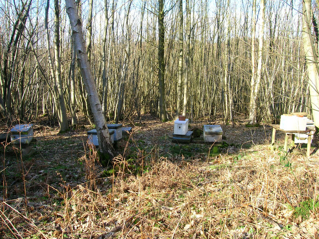 Beehives, Waydown Wood