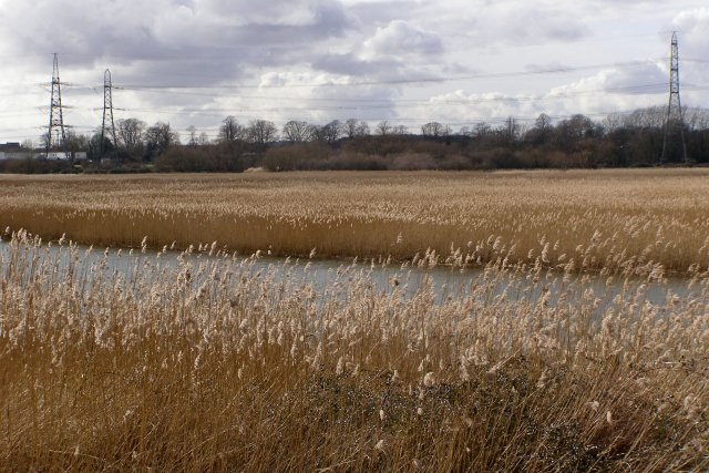 River and reedbeds, Lower Test nature reserve