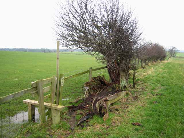 Stile and hedgerow