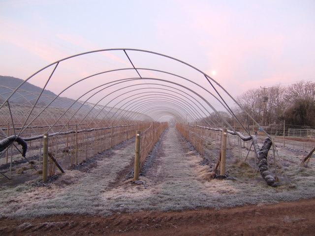 Raspberry tunnels