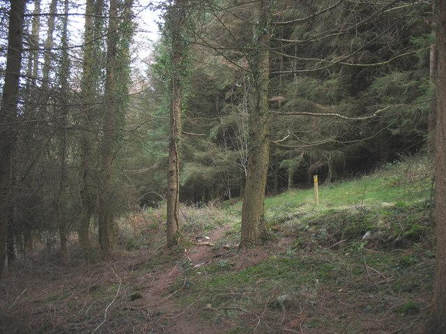 Footpath in Cwm-gwared Plantation