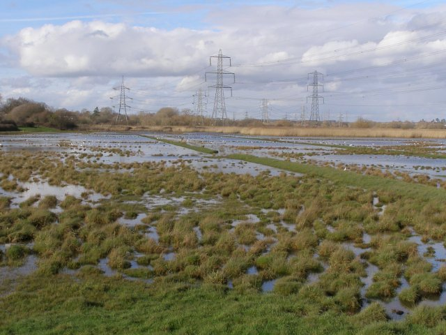 Site of salterns, Lower Test nature reserve