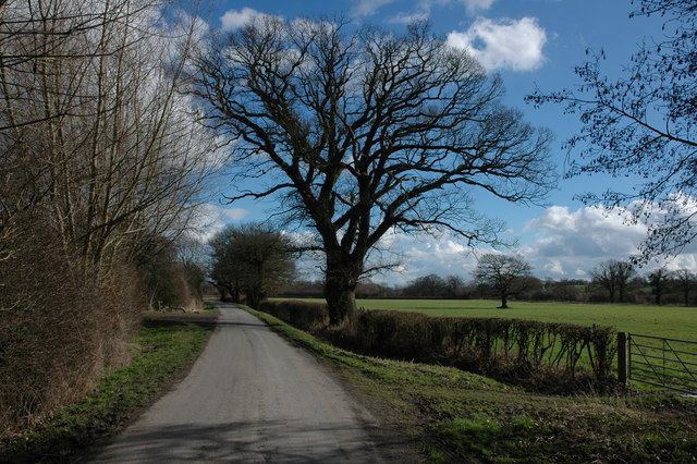 Country lane across Longdon Marsh
