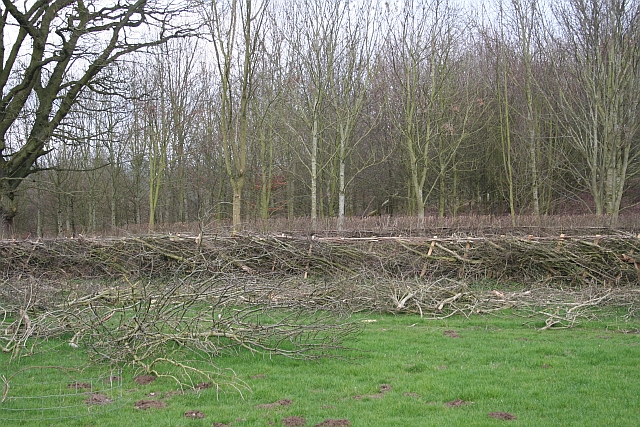 Recently Laid Hedge